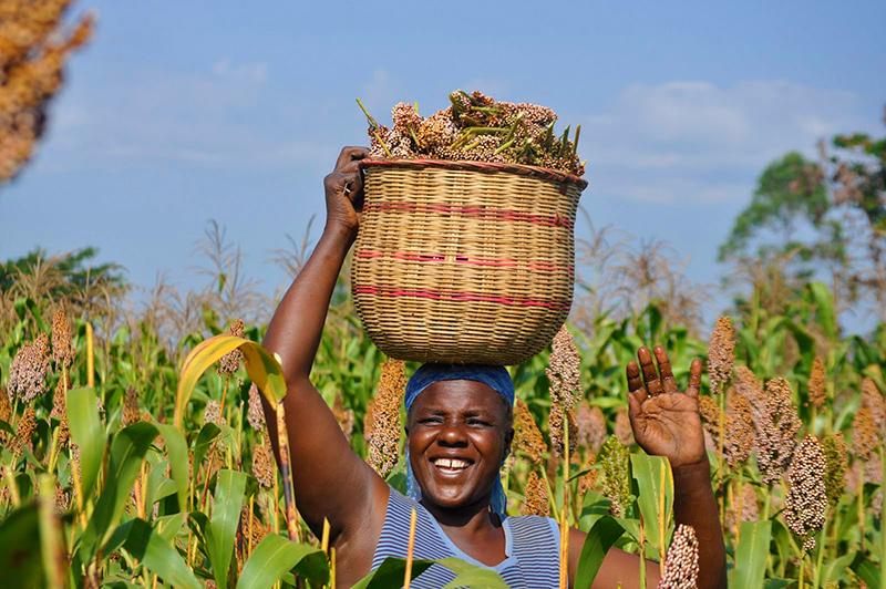 sorgum-farmers